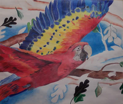 Unfinished Parrot, 2001 (Colored Pencil) by Kendra M. Storer